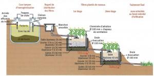 assainissement, éleveurs, FNSEA, FDSEA, phyoépuration